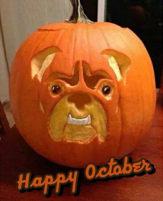 English bulldog pinteres for Vampire teeth pumpkin stencils