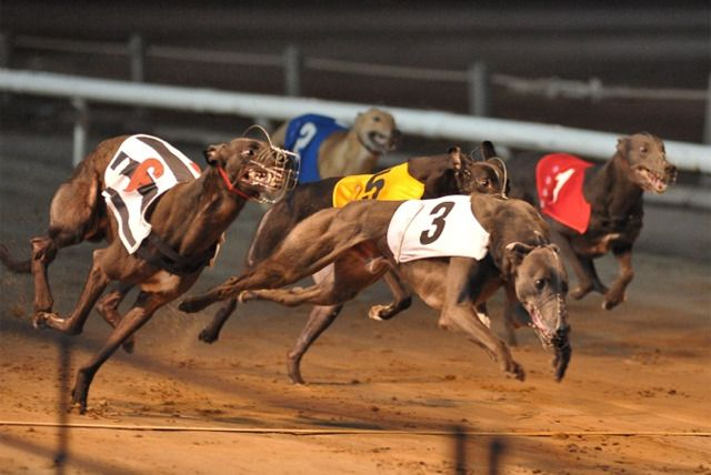 Coventry greyhounds betting russia portugal betting tips