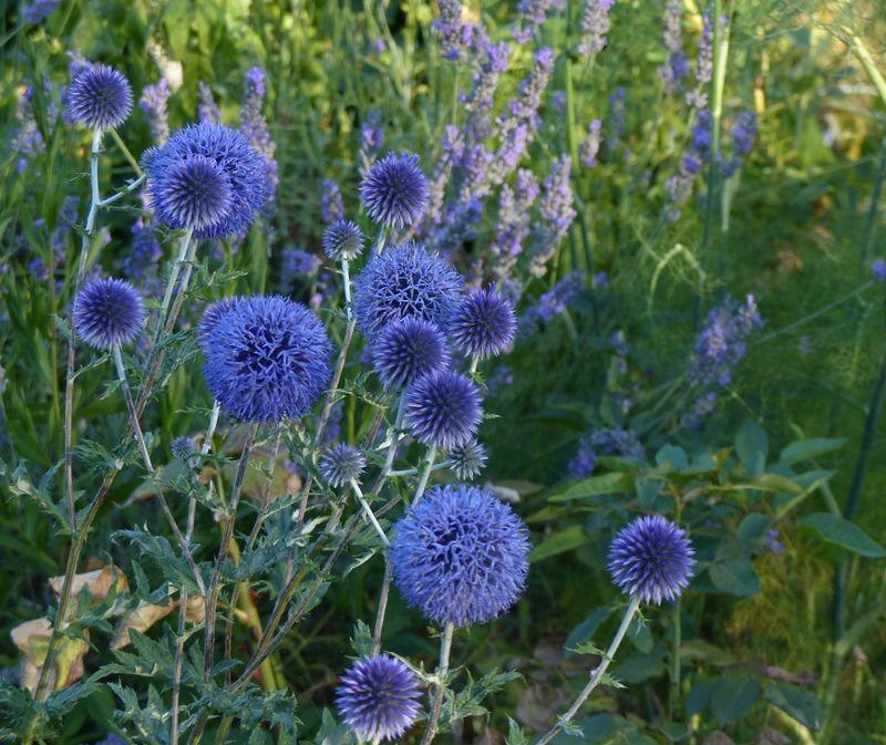 Bleu Blanc Rouge Rouge Cabane Jardin Bleu Arbuste Et Fleurs