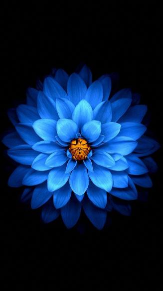 Les Top Wallpaper Iphone 6 Fleur Recherche Google