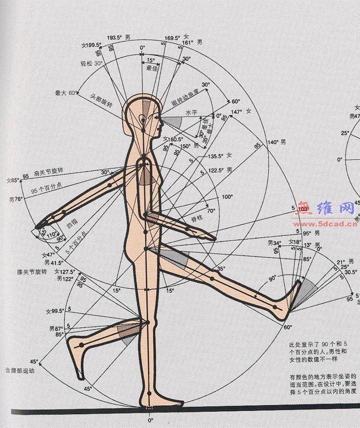 人体工程学图片资料_无维网 | Anthropometry + Ergonomics + ...