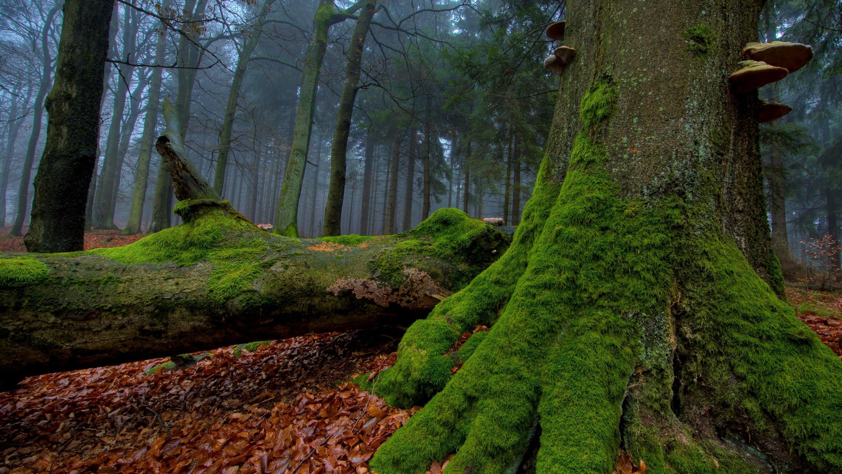 Nature Leaves Forest Moss Wallpaper Tree Wallpaper Forest Wallpaper Autumn Trees