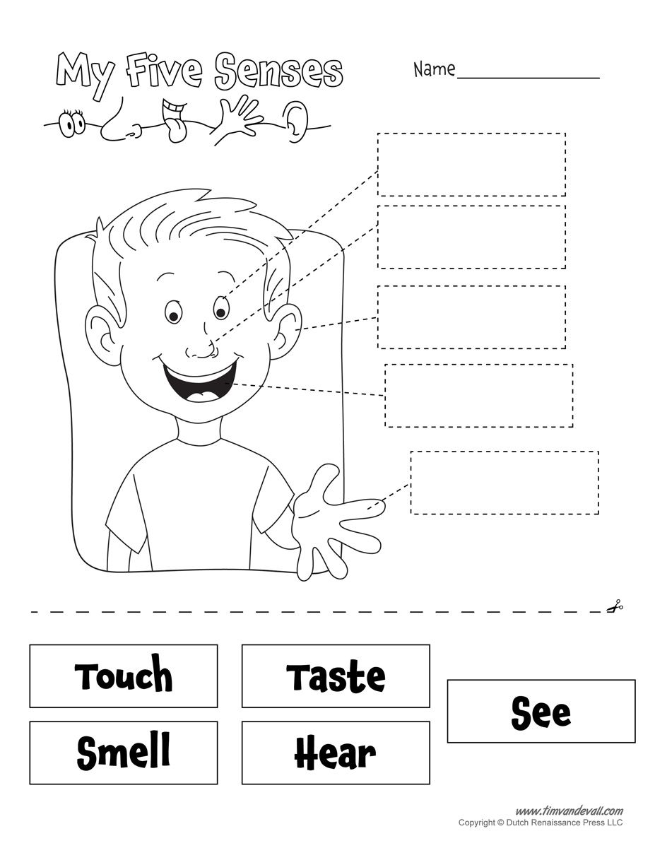 www.timvandevall.com wp-content uploads 5-senses-worksheet.jpg   Senses  preschool [ 1200 x 927 Pixel ]