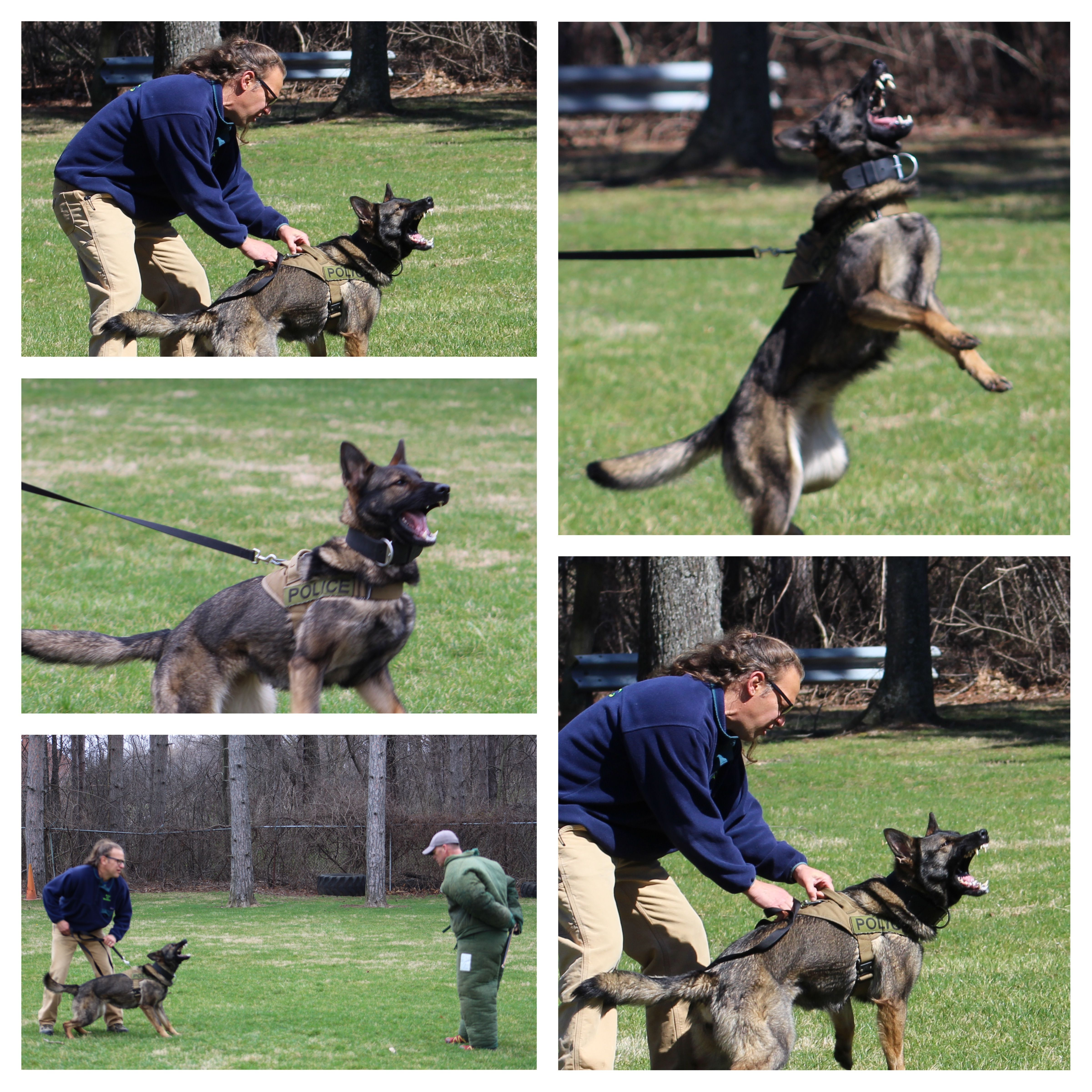 K9 Kyra Doing Some Bite Work Training She Is An Incredibly Social
