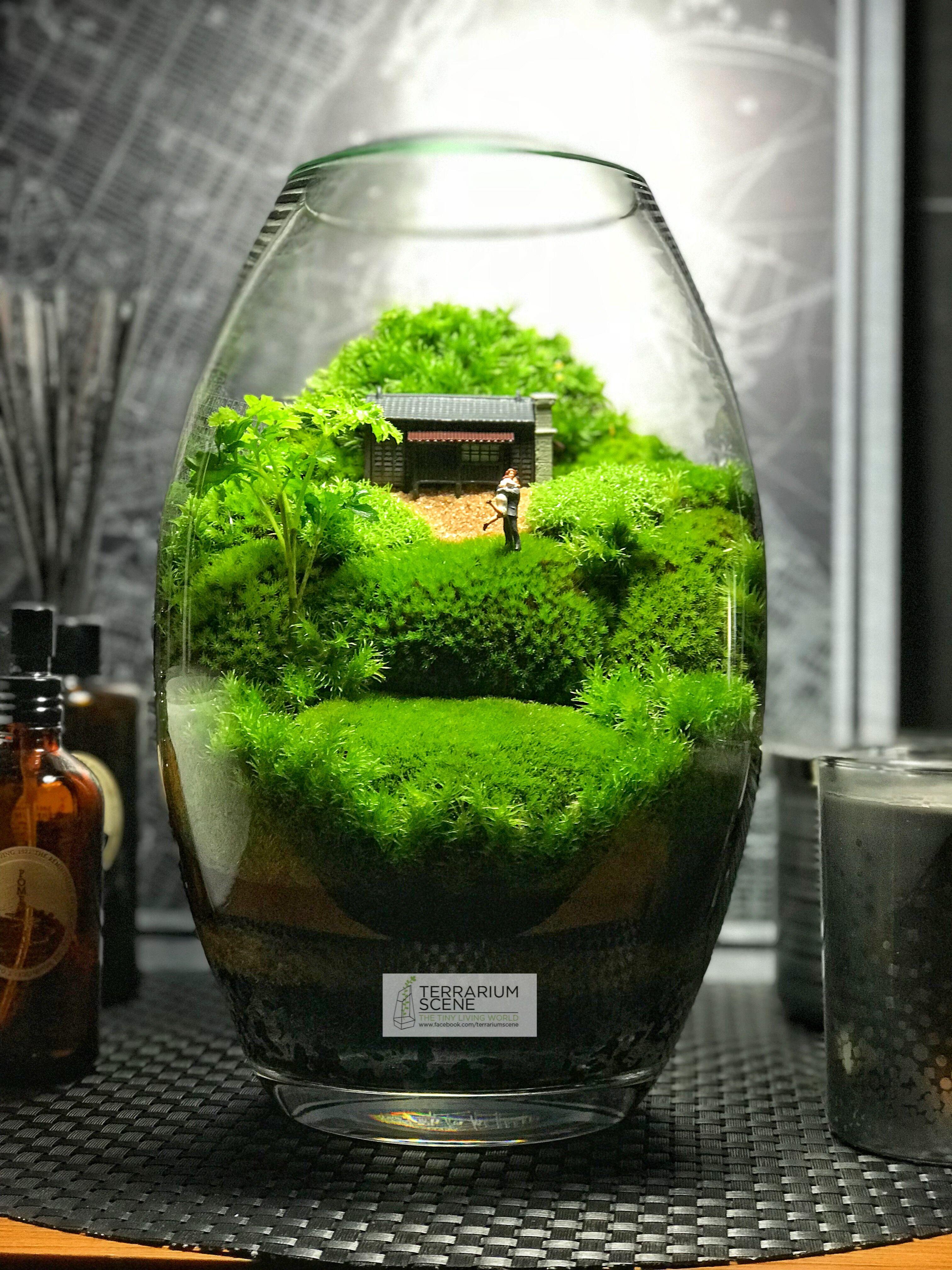 Pin By Terrariumscene On Moss Gardens Terrarium Jar Terrarium