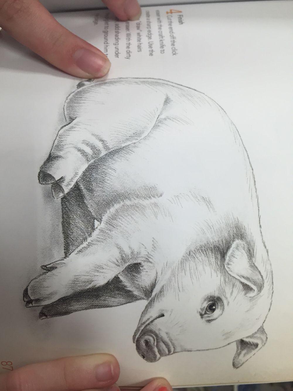 PIGG drawing