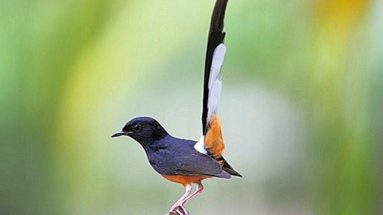 Daftar Harga Burung Terbaru Lengkap April 2020 Di 2020 Burung Binatang Hewan