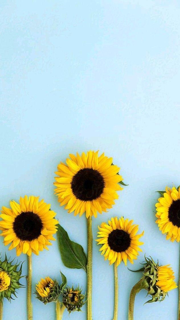 sunflower   Photo edited by AirBrush App