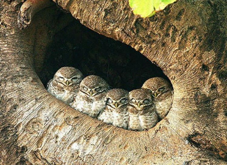 These Owls Resting Up For The Night