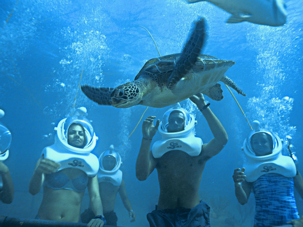 Olympus Tours Travel Blog Cancun Resorts Kid Friendly Hotels Sea Trek