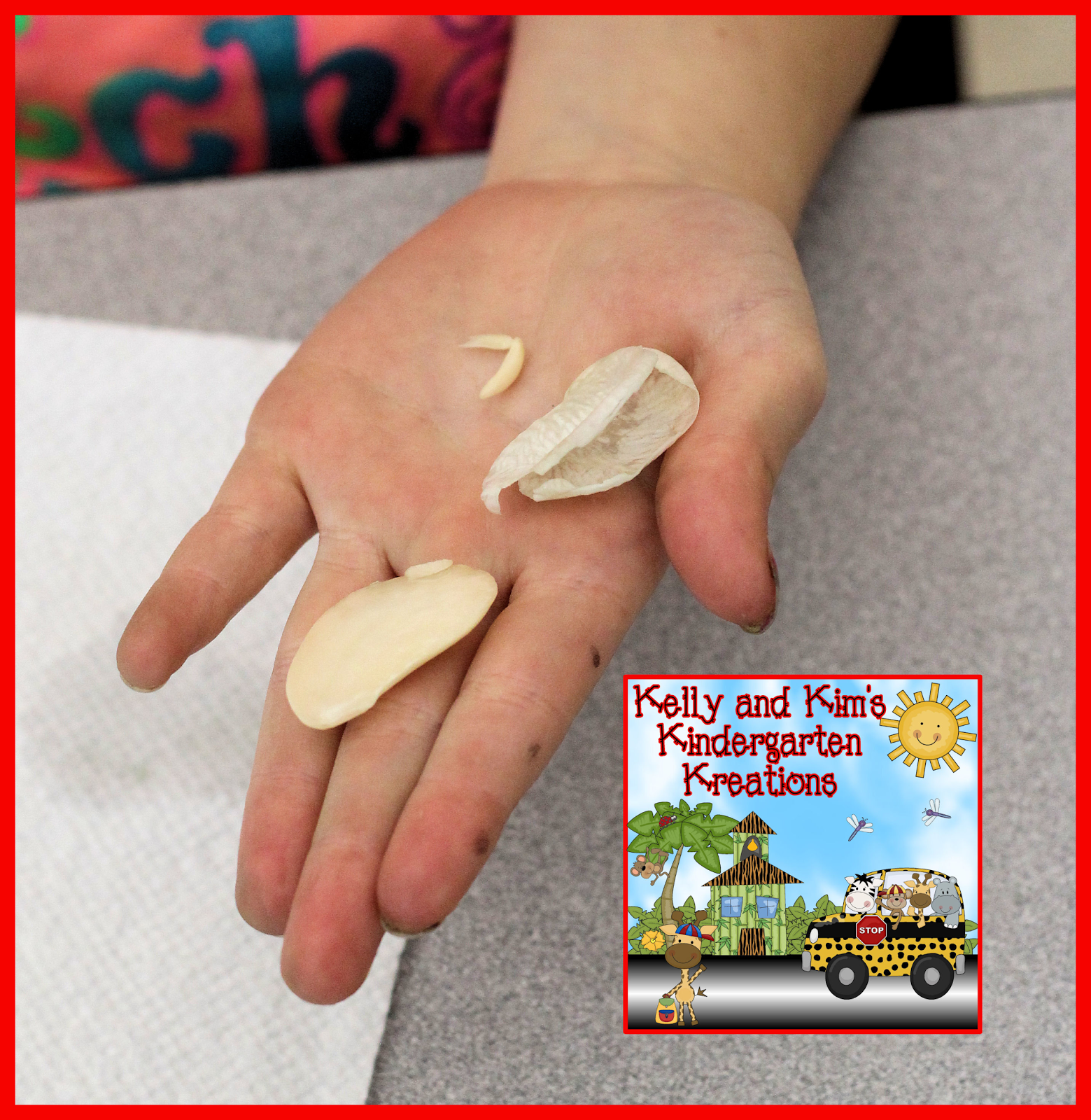 Soaking Lima Beans To Find The Seed Coat Food Storage