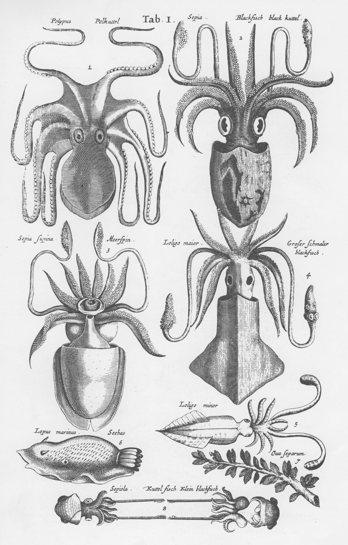 weibliche Anatomie Zeichnung Lektion - Google zoeken | perpetual ...