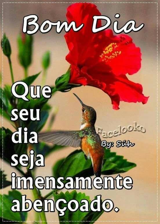 Imagem Embutida Com Imagens Imagens De Bom Dia Mensagens De