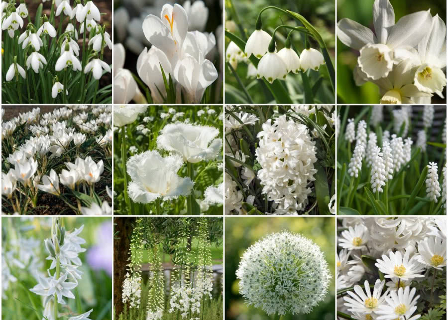 Kwiaty Cebulowe Sadzone W Maju Garden Plants Flowers