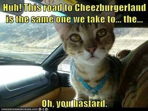 HUH? This road to Cheezburgerland is the same one we take to the ...Oh You B !