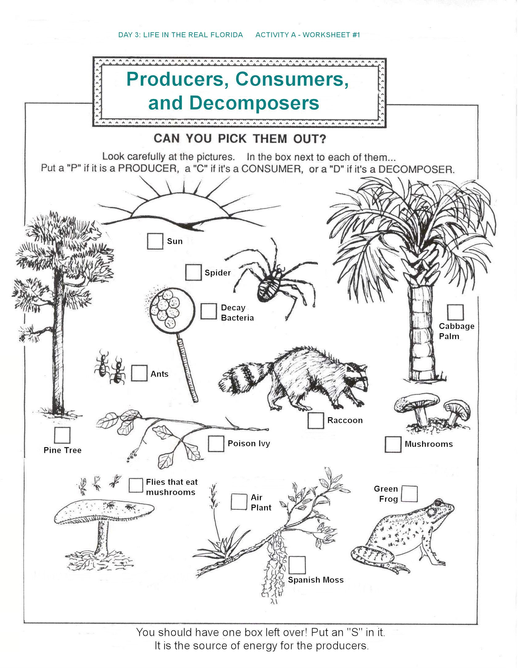 decomposers worksheets for kids – Producer and Consumer Worksheet