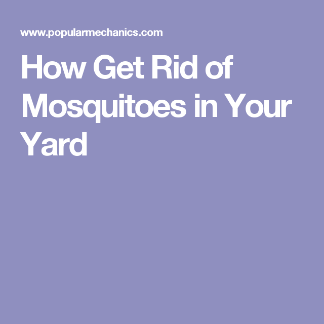 How to Get Rid of Mosquitoes in Your Yard | Yard, Lawn ...