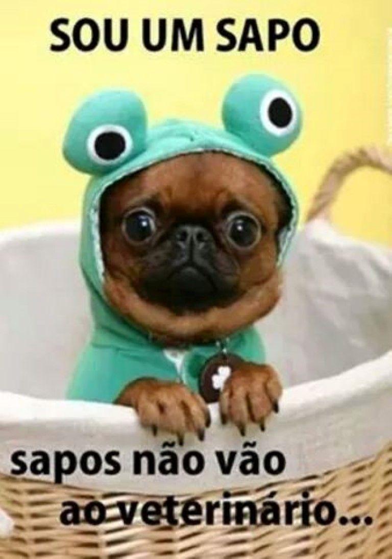 Pin De Letícia Vieira Em Frases Engraçadas Cães Engraçados