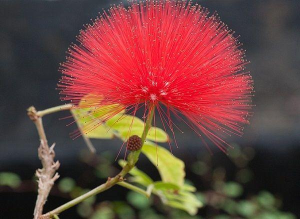 Las mejores flores para cultivar a pleno sol 1 parte for Vivero plantas exoticas