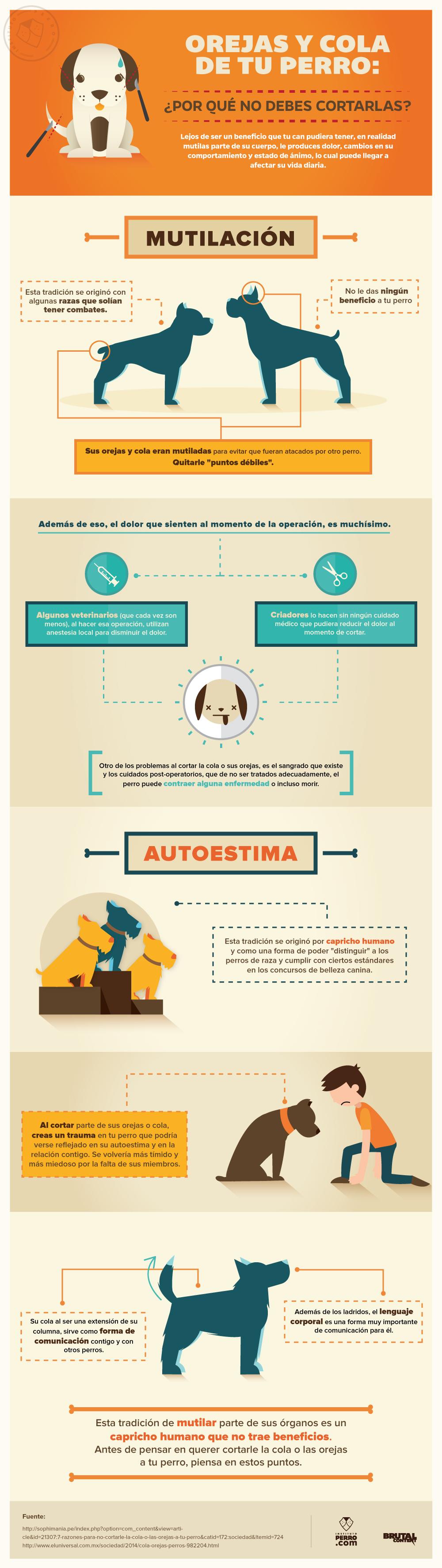 Infografía Por qué no debes cortar las orejas ni la cola