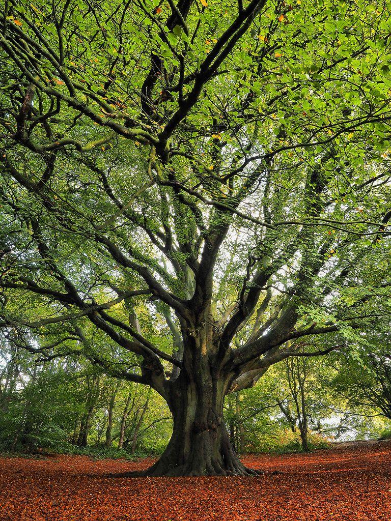 Живописное дерево картинки