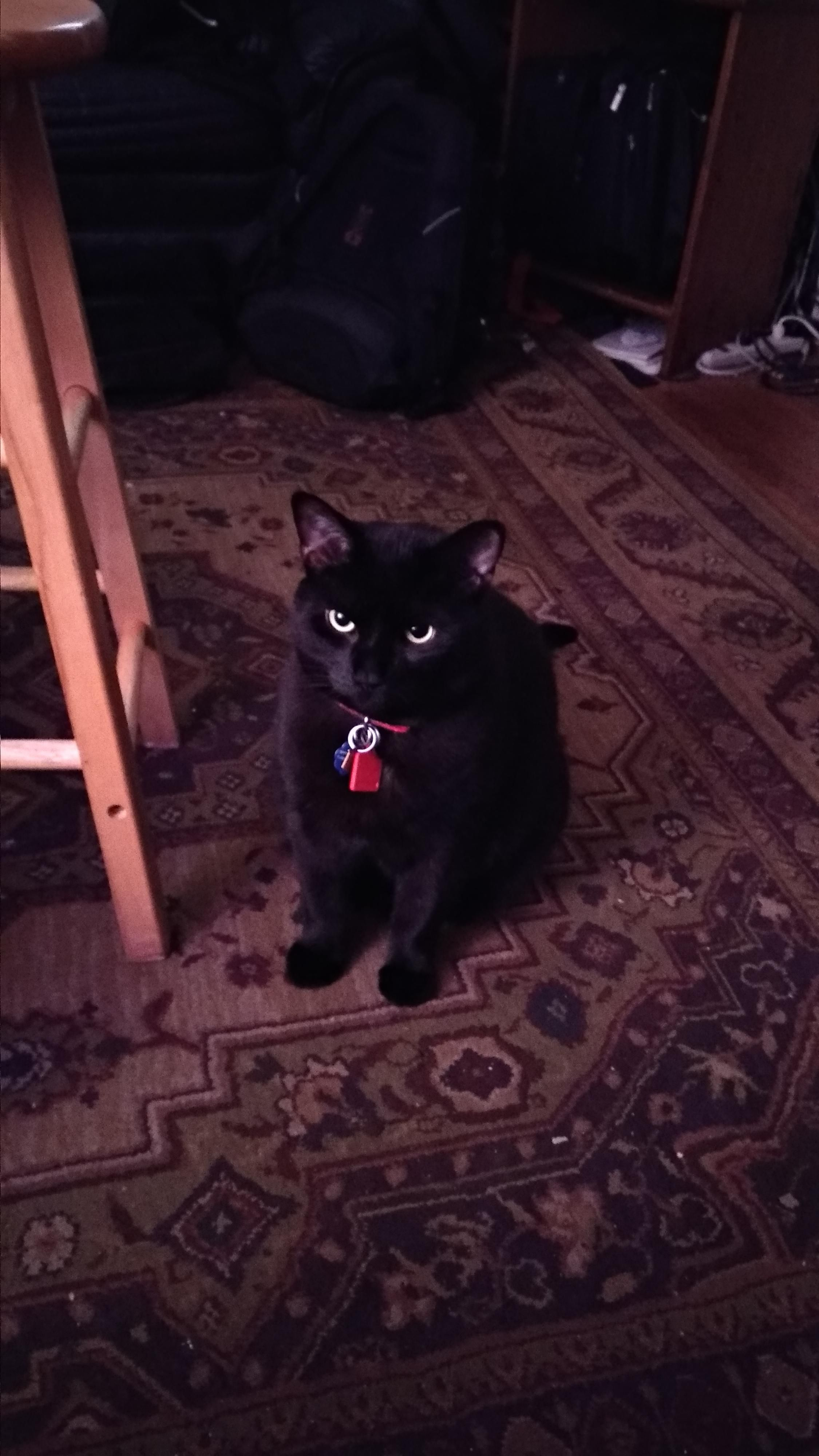 My Baby Toby We Got Him A Year Ago Yesterday Hello There Bright People Are You Catlover Or Have You Any Cat Having Kittens Cutest Kitten Breeds Crazy Cats