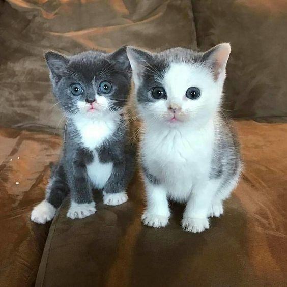 A Pair Of Sweeties Suloisuutta Sopot Kissat Cute Kittens Ja Kissanpennut