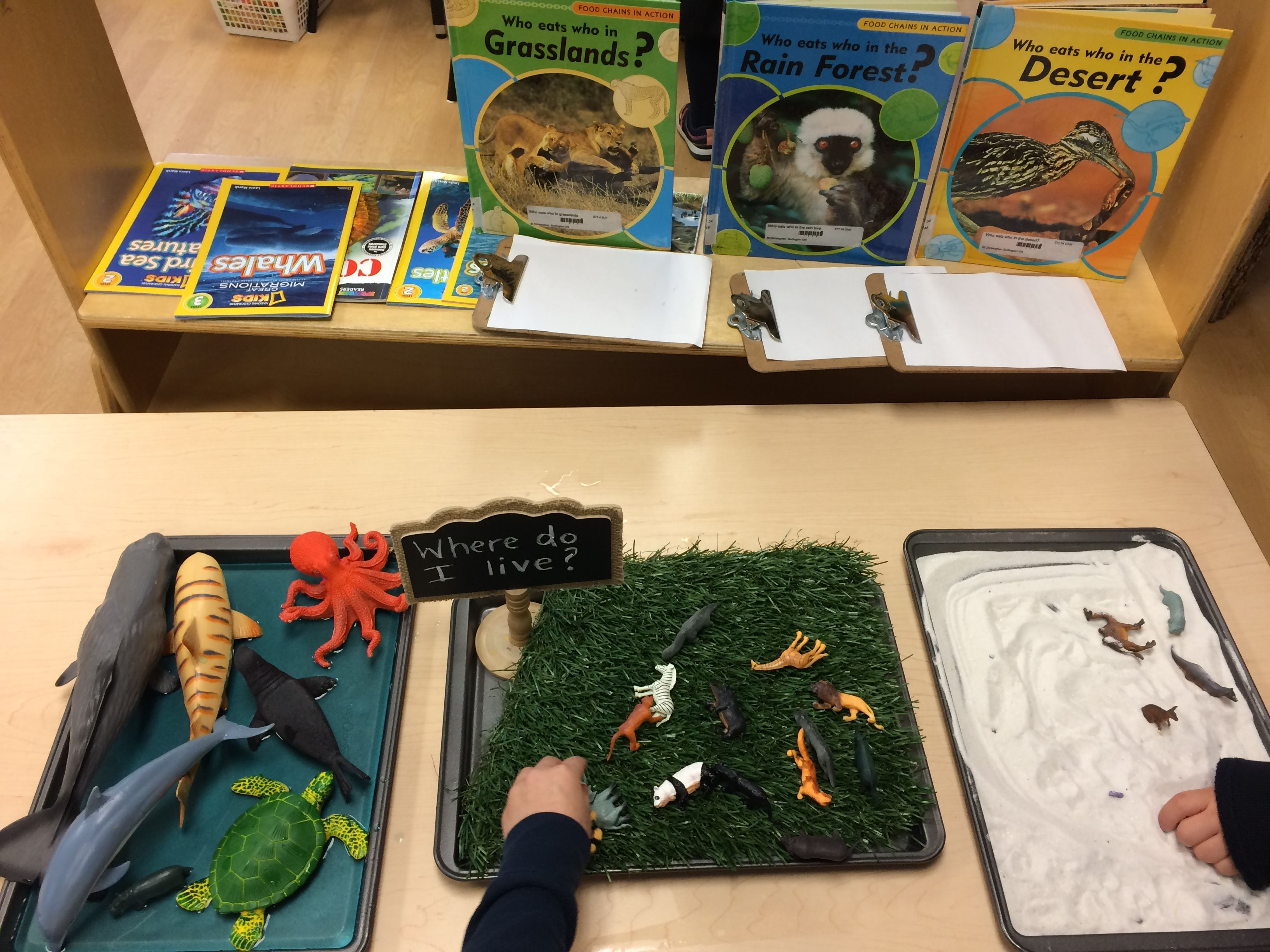 Sorting Activity Of Where I Live For Animals In Our