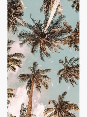 palm trees Poster by silviasxan