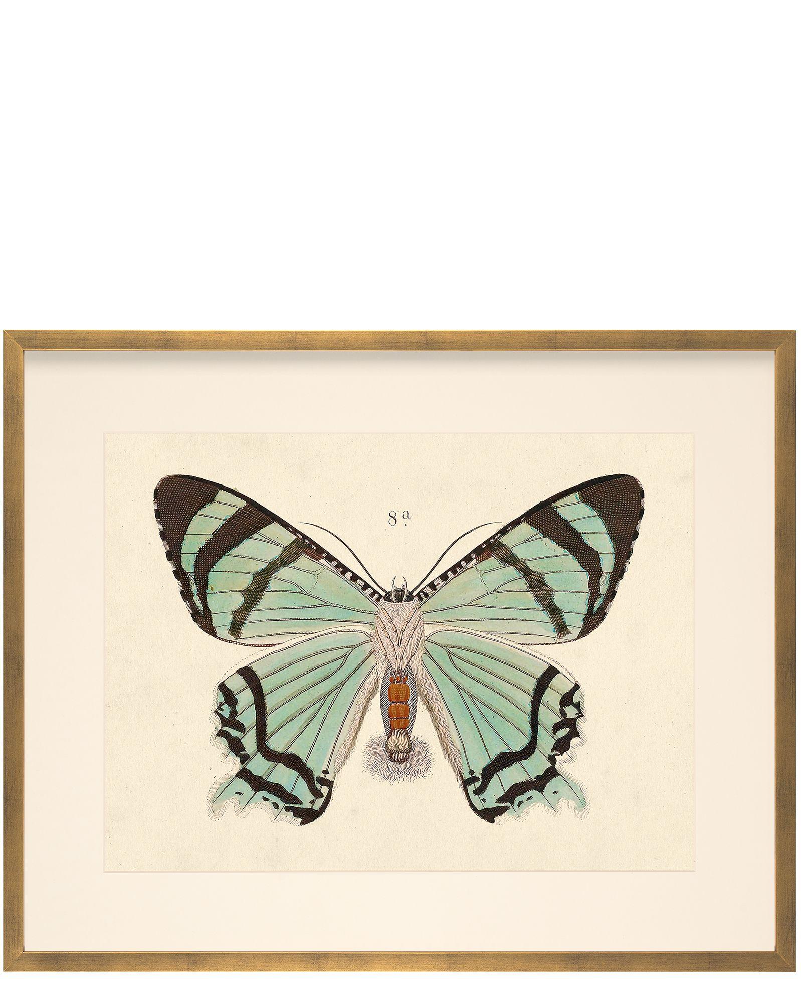 Erfly 8a By Whalebone Creek Prints