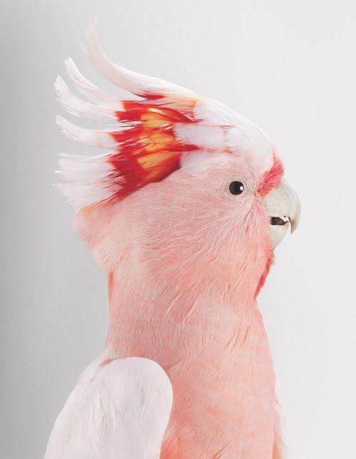 Who's A Pretty Bird