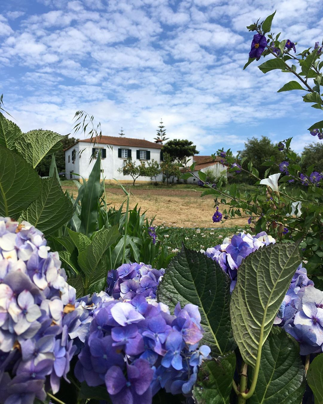 #countryside#natur#naturephotography#nature#natureza#naturelovers#natures#portugal#loveportugal#portugallovers#portugalovers#travel#portugaldenorteasul#portugalemclicks#recantosdeportugal#maia#visitportugal#portugal_photos#portugaltravel#portugal_a_gramas#portugalemperspectiva#portugalemcliks#portugal_em_fotos#portugal_places#maiaportoportugal#portugal_vision#portugal_gems#portugaldenorteasul#visitportugal#loveportugal#photographylovers#phototravel#country