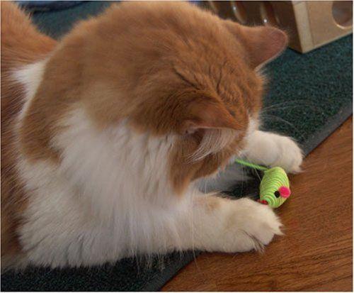 Zanies Rattling Hypno Mice Cat Toys - Set of 4 (fur free) Zanies. $3.50