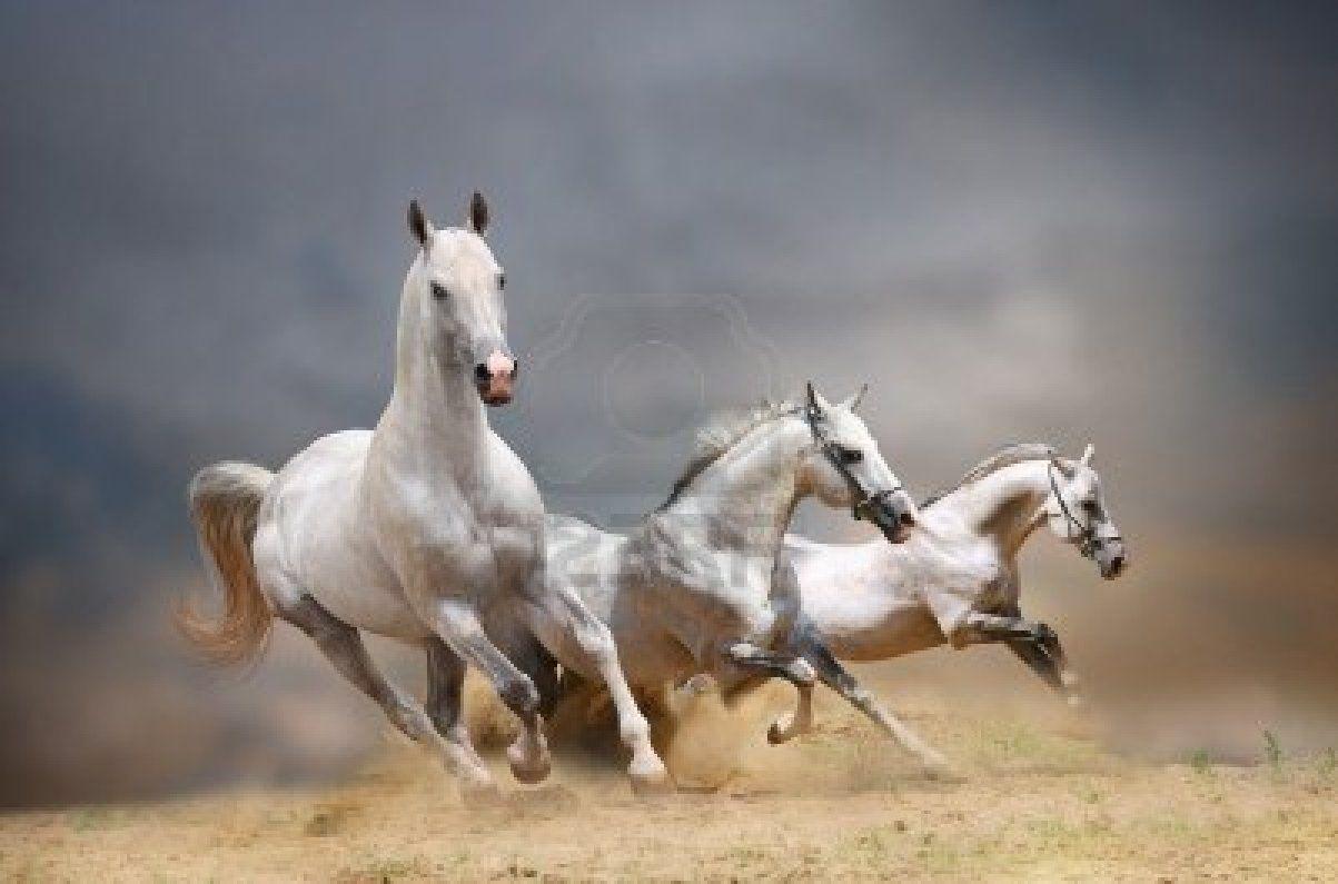 Stock Photo Horses, White horses, Horse posters