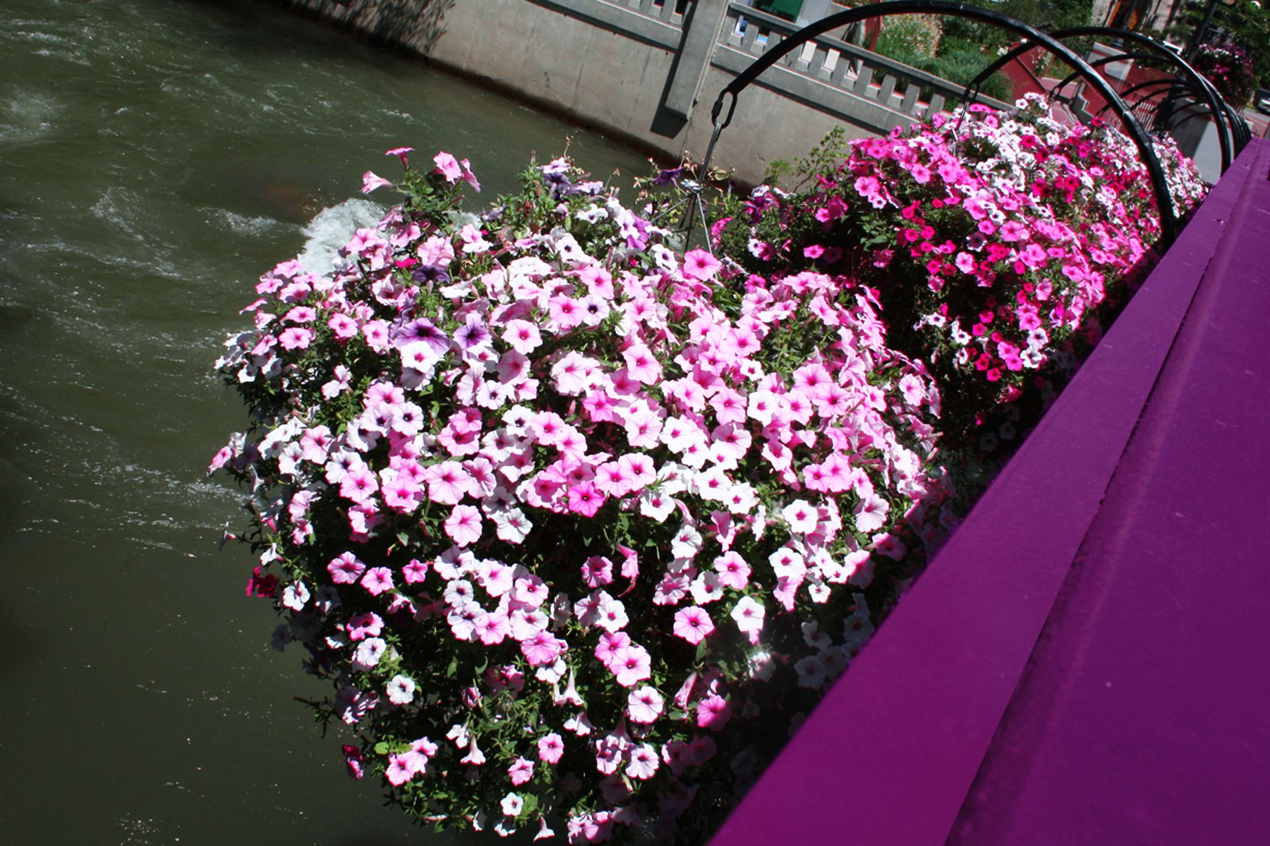Downtown reno flower baskets via paul klein flower