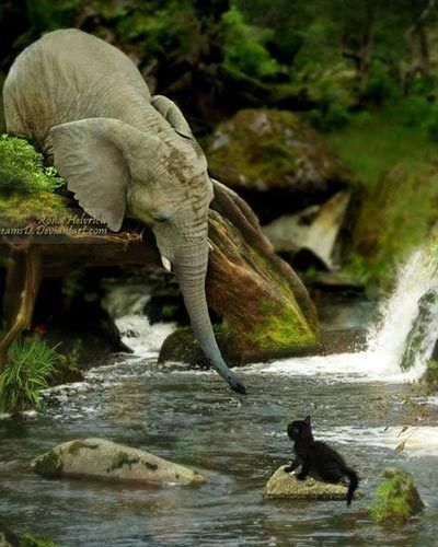 Elephant helping kitten-  This is really just a poorly done photoshopped image. There are so many things are wrong with this