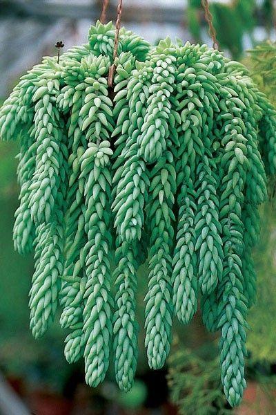 rsultats de recherche dimages pour plantes grasses entretien - Les Plantes Grasses D Exterieur