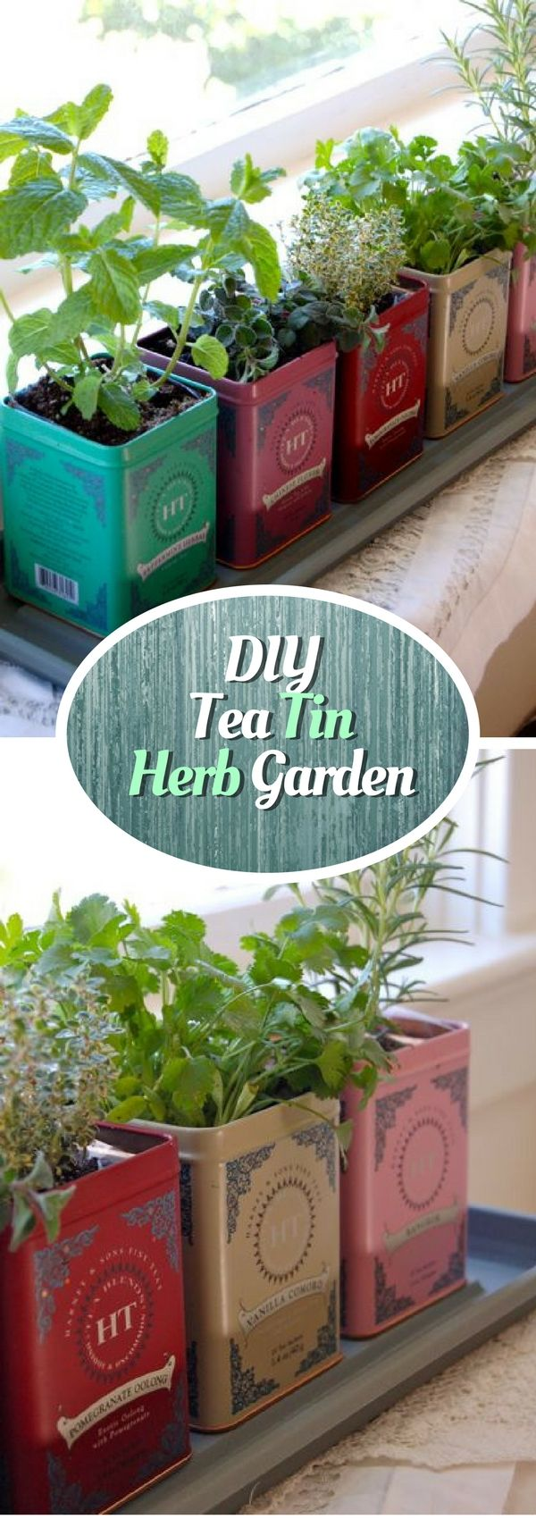 check out how to make a diy herb garden form tea tin cans istandarddesign - How To Start An Indoor Herb Garden