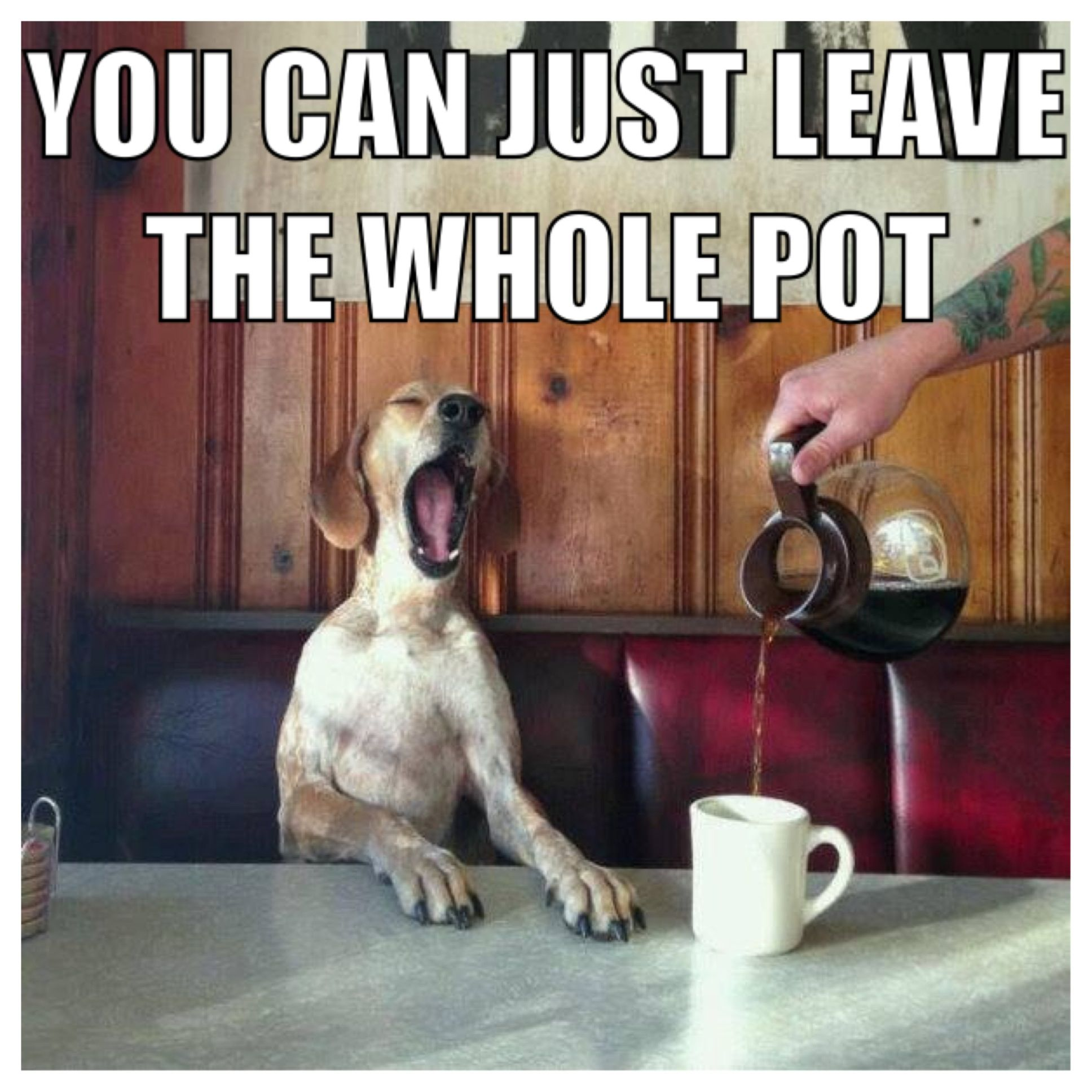 Good Morning Meme Wednesday : Happy wednesday mornings pets cute funny