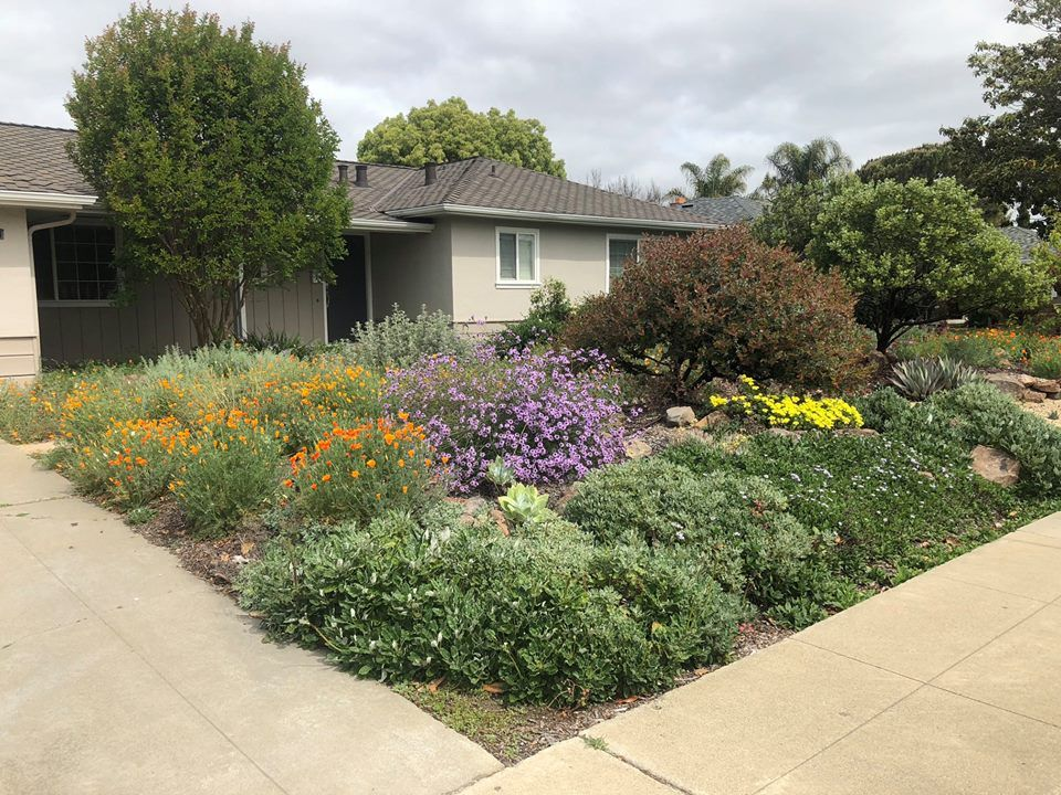 California Native Plant Society 20 hrs · Who needs a boring lawn? 7 ...