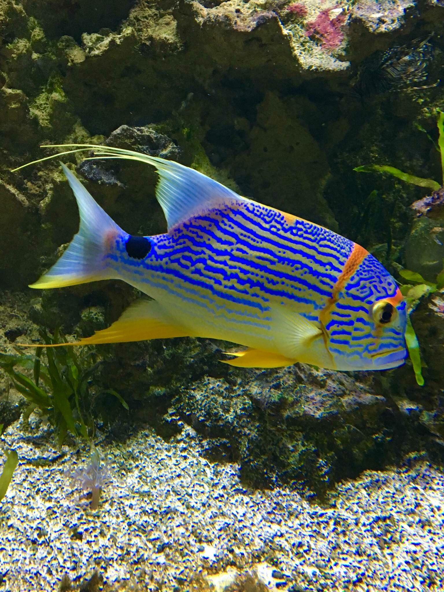 Aquariums, Fish Aquariums, Fish Tanks