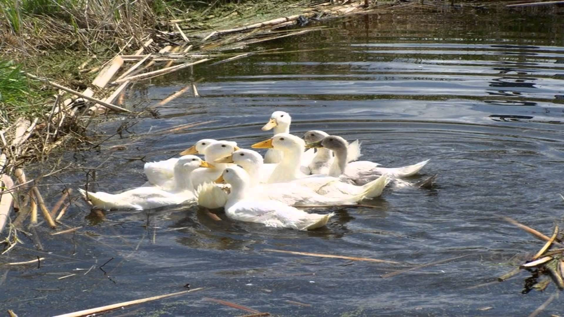 The Duck on the Pond may encourage you to leave the house more often and explore the many attractions of Banbury Oxfordshire. Even if you know the area well ...