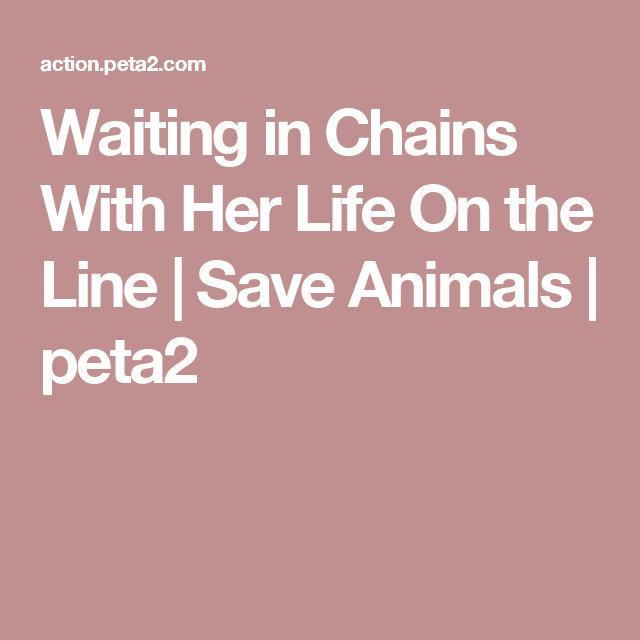 Waiting in Chains With Her Life On the Line | Save Animals | peta2