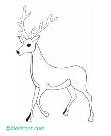 animals name coloring pages deer - Coloring Pages Of Deer 2