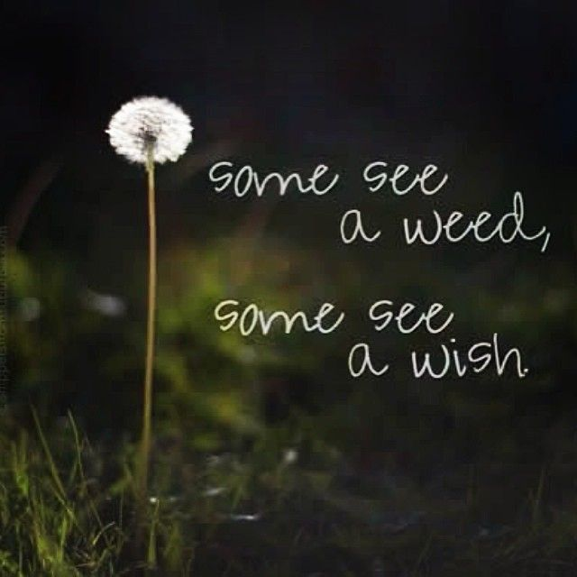 When was the last time you blew one of these out? Nurture your spirit with a little smile
