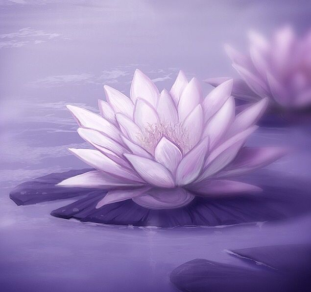Lotus The Lotus Flower Has Eight Petals Which Correspond To The