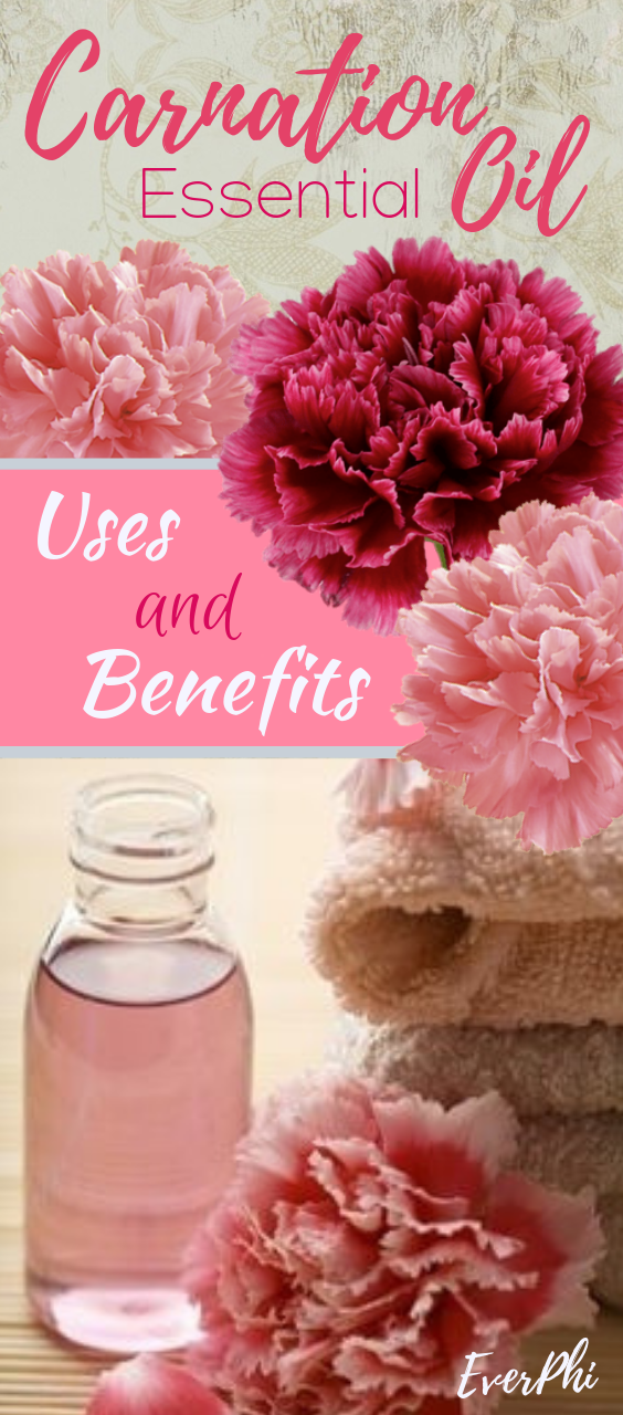 Carnation Essential Oil Uses And Benefits Essential Oil Uses Essential Oils Carnations