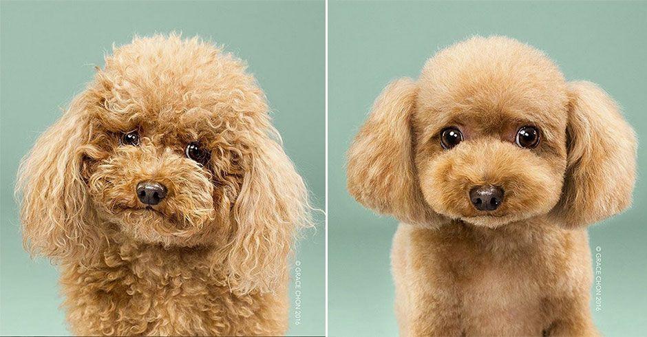 So süß sehen die Hunde nach dem Make-over aus #News #Unterhaltung