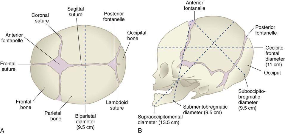 Fetal Skull Diagram | Midwife's Assistant Field Guide