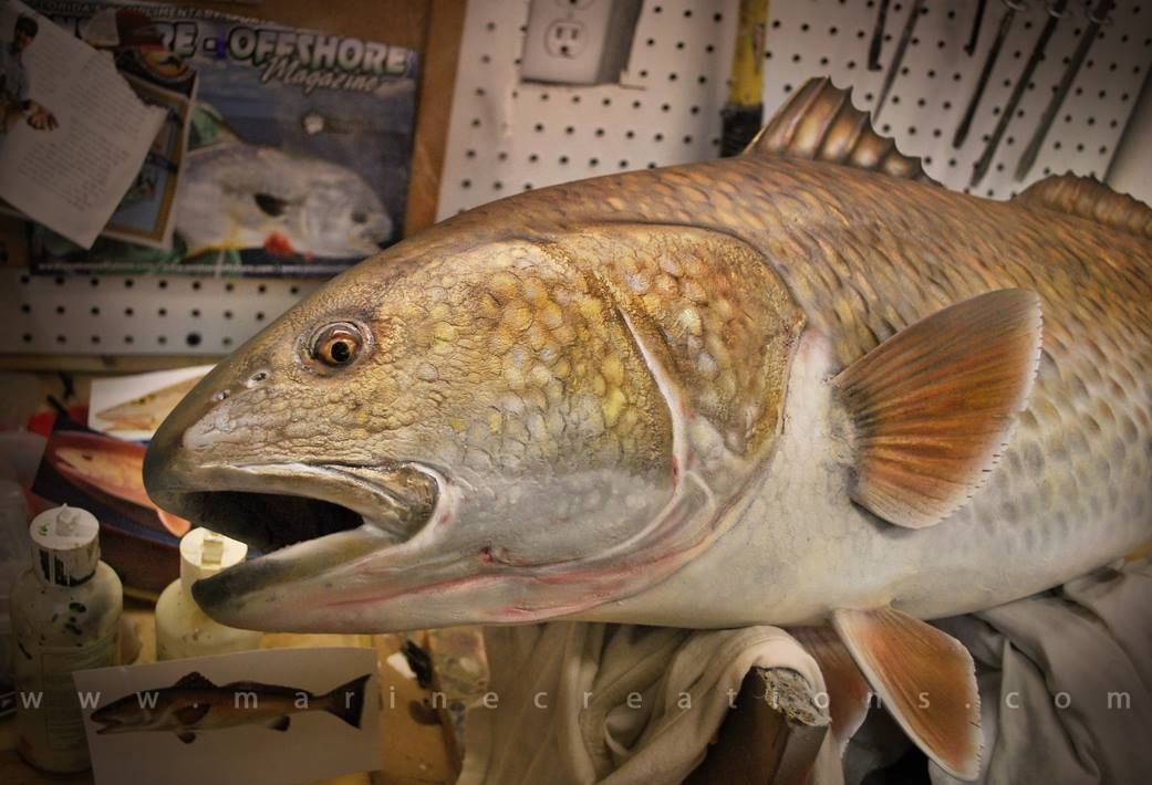 Bull Redfish By Marine Creations Its A Skiff Life Fish Red